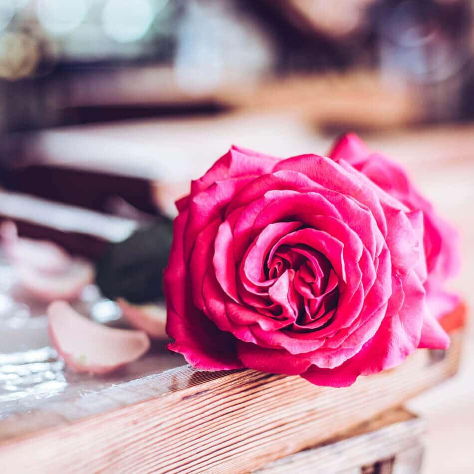 macomamoi galimard rose
